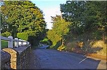 T0928 : R742 road at Curracloe/Currach Cló by P L Chadwick