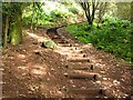 NT1597 : Steps, Benarty Wood by Richard Webb