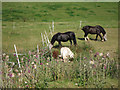TQ2308 : Horses at Mile Oak Farm by Oast House Archive