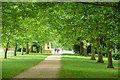 SP6736 : Stowe Park, Queen's Avenue : Week 35