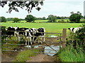 SJ5960 : Cheshire dairy land by Jonathan Billinger