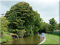 SJ8935 : Trent and Mersey Canal above Meaford Locks, Staffordshire by Roger  Kidd