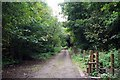 SJ8243 : Lymes Rd &amp; Springpool Wood by Glyn Baker
