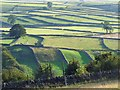SK2177 : Fields near Eyam by Robin Drayton
