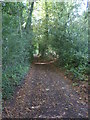 TQ6260 : The North Downs Way through Hognore Wood by Ian Yarham