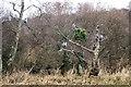 SH3734 : The heronry near Ffordd Caerdydd / Cardiff Rd in winter by Natalia A McKenzie