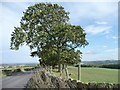 SE2809 : Roadside tree on a windy day by Christine Johnstone