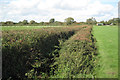 ST5783 : Hedges either side of a rhine  by Robin Stott