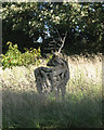 SX8349 : Stag sculpture, Lower Ash  by Robin Stott