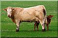 NN8913 : Farmland at West Park : Week 41