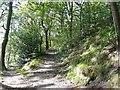 SE0026 : Path junction on Hebden Royd FP 17, Redacre Wood, Mytholmroyd by Humphrey Bolton
