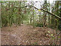 SO8793 : Cycle trail in Bullmeadow Coppice by Richard Law