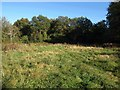 TQ3257 : Small field, Coulsdon Common by Derek Harper