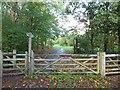 SJ4866 : Tarvin Community Wood by David Smith