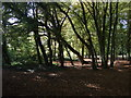 TQ4792 : Shady copse Hainault Forest Country Park on an autumnal morning by Richard Hoare