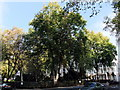 TQ2977 : Trees in St Georges Square, Pimlico by PAUL FARMER