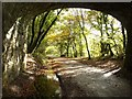 SX5259 : Bridge, Plym Valley Trail by Derek Harper