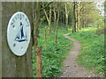 SO7291 : The Severn Way enters Cliff Coppice by Mat Fascione