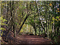 SO8992 : Woodland walk in Baggeridge Country Park by Roger  Kidd