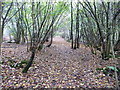 TQ0635 : Footpath FP384 in Lodge Copse by Dave Spicer