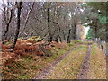 NH6791 : Track through Migdale Woods by sylvia duckworth