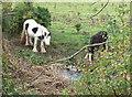 SK5600 : Horses along the River Soar by Mat Fascione