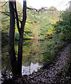 SO8992 : The Upper Wishing Pool in Baggeridge Country Park near Sedgley by Roger  Kidd