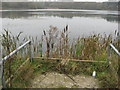 SJ6068 : Fishing platform with bulrushes by Dr Duncan Pepper