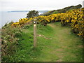 SX3353 : Coast path above Cargloth Cliffs by Philip Halling