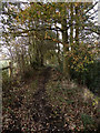 SJ9482 : Footpath, Poynton Coppice by David Dixon