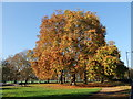 TQ2880 : Autumn Colours in Hyde Park by PAUL FARMER