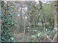 SJ6460 : Inside Paradise Wood by Dr Duncan Pepper