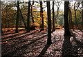 SU9586 : Heathfield Wood by Graham Horn