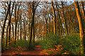 SP9206 : Autumn in Widow Croft by Tom Presland