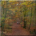 SU9484 : Burnham Beeches by Graham Horn