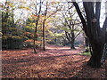 TQ4093 : November sunlight in Knighton Wood by Roger Jones