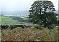 NZ6907 : South from Danby Low Moor by Graham Horn