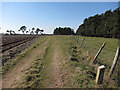 TL7679 : Bridleway around Lakenheath Warren by Hugh Venables