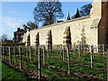 SK9771 : Vineyards outside Lincoln Medieval Bishops' Palace by PAUL FARMER