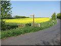 TL2679 : Oil seed rape field by Hugh Venables