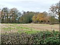 SJ7575 : Field on the north side of Middlewich Road by Christine Johnstone