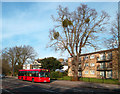 TQ4167 : Mistletoe and Bus, Bromley Common by Des Blenkinsopp