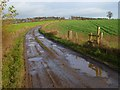 NZ2902 : Track and farmland, South Cowton by Andrew Smith