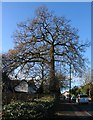 SP2978 : Oak, Broad Lane by E Gammie