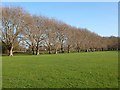 TL4559 : The Avenue, Jesus Green by Oliver Dixon