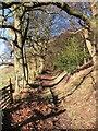 SE5085 : Hillside bridleway : Week 51
