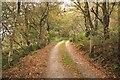 SJ5254 : Footpath near Bickerton Hill by Jeff Buck