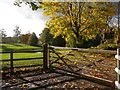 SJ5671 : Autumn colours on Gallowsclough Lane, Norley by Colin Park