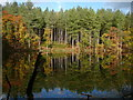 SJ5570 : Autumn colours at Dead Lake, Delamere Forest by Colin Park