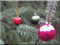 SE2100 : Baubles on the tree by Dave Pickersgill
